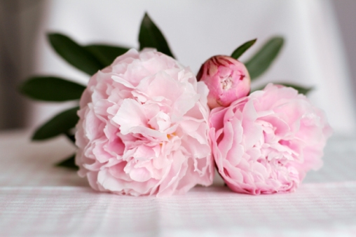 roses-by-claire-floral-pivoine-rose-pale