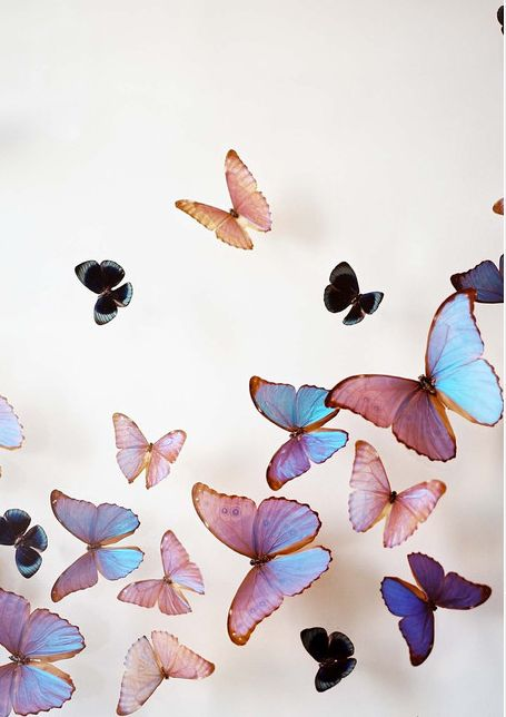 buterfly4